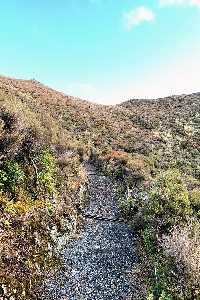 Hiking track on the Rimutaka Hill, Upper Hutt
